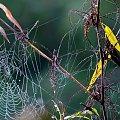 nad rzeką ... #jesień #pajęczyna #liście