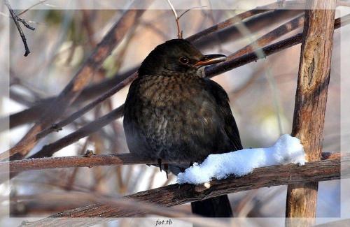 Zima i ptaki...
