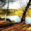 Warta w Naramowicach w jesiennych kolorach. #rzeki