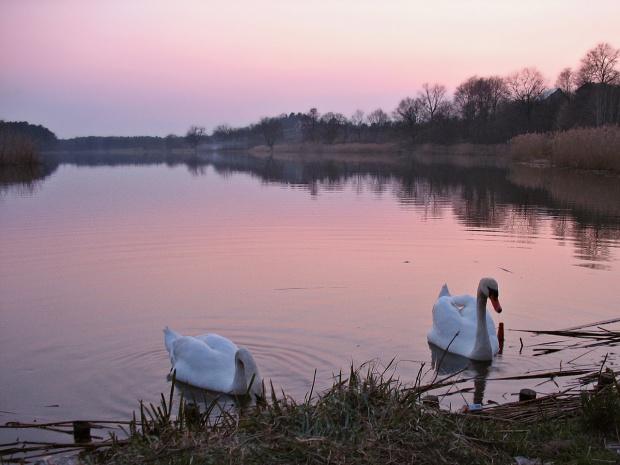 znowu łabędzie :) #zmierzch #zalew #ZachódSłońca #łabędzie #niebo #woda