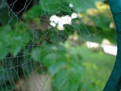 Pajęczynkowo #makro #kropelki #pajęczyna