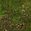 #natura #łąka #trawy #pajęczyny