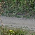 #PolnaDroga #trawy #pajęczyny