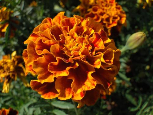 Dzień dobry wszystkim ;-) #kwiatek #makro #kwiat