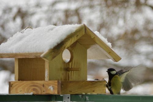 #ptaki #sikorka #karmnik #zima