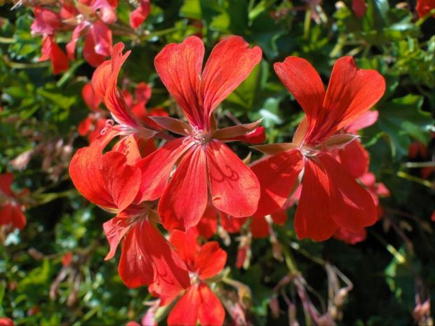 Dzieńdoberek ;-) #kwiatki #kwiat #makro #czerwone