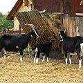 fajnie tam mają #farma #agroturystyka #Smolec #kozy #owce