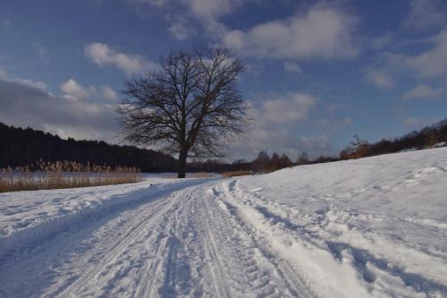 w końcu i u mnie było słonecznie; napstrykałam więc fotek ile się dało i trochę zarzucę nimi Fotosik :) #zima