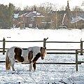Wygnany na mroz :( #Pony #konie #natura