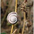 #ślimaki #ogród