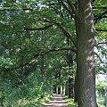 ta dróżka już kiedyś była, ale lubię ją :) #drzewa #ścieżka #dróżka