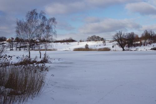 #zima #śnieg #zalew #niebo #styczeń #drzewa #brzozy